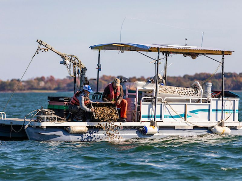 The Nature Conservancy and Partners to Buy 5 Million Surplus Oysters from Shellfish Farmers Affected by COVID-19 Crisis