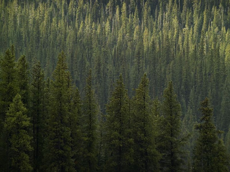 Grow your own way: Study highlights climate mitigation potential of encouraging Earth's forests to regenerate naturally